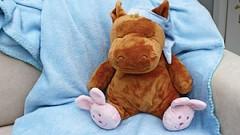 Soutěž o 6 cen: Nakresli koně a vyhraj třeba Jezdecký tábor pro děti